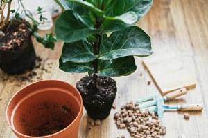 Best Pot for fiddle leaf fig tree
